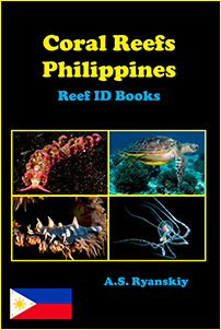 Coral Reefs Philippines