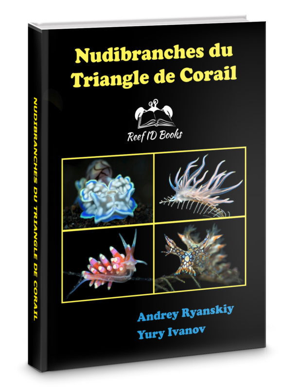 Nudibranches du Triangle de Corail