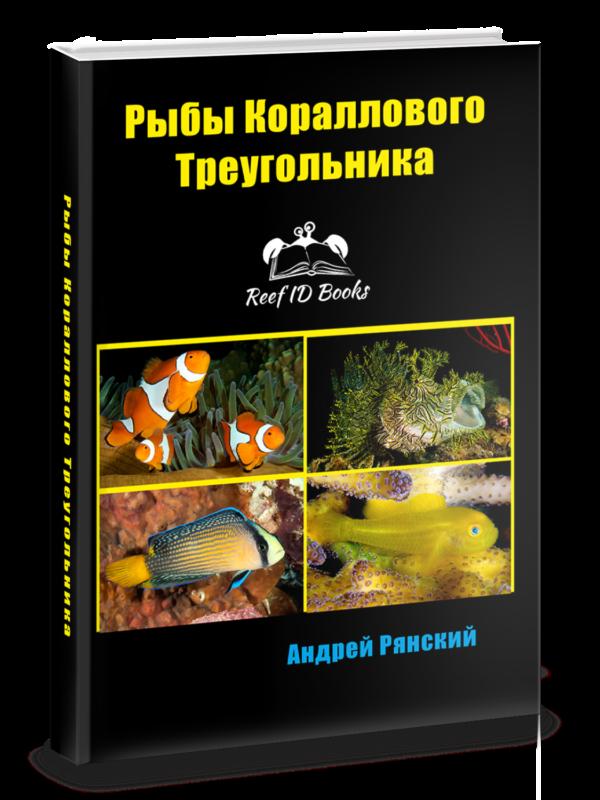 Рыбы Кораллового Треугольника